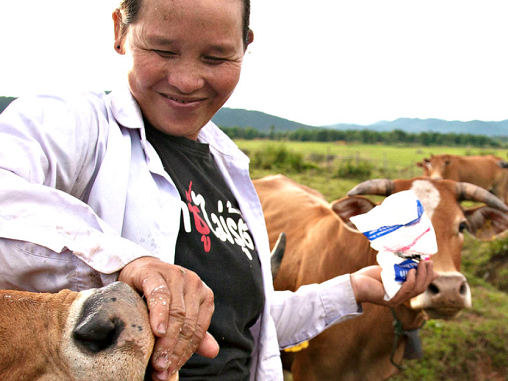 A farmer in Laos tends to her cattle. Data-driven approaches are helping the livestock sector build back more sustainably. Photo: S. Mann (ILRI)